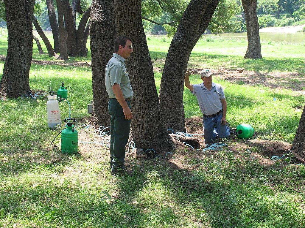 deep root tree fertilization