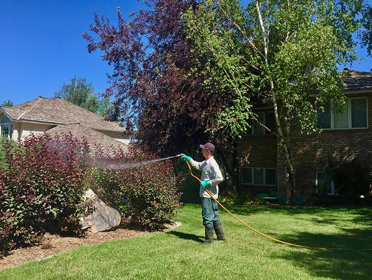 technician spraying dormant oil on trees and shrubs