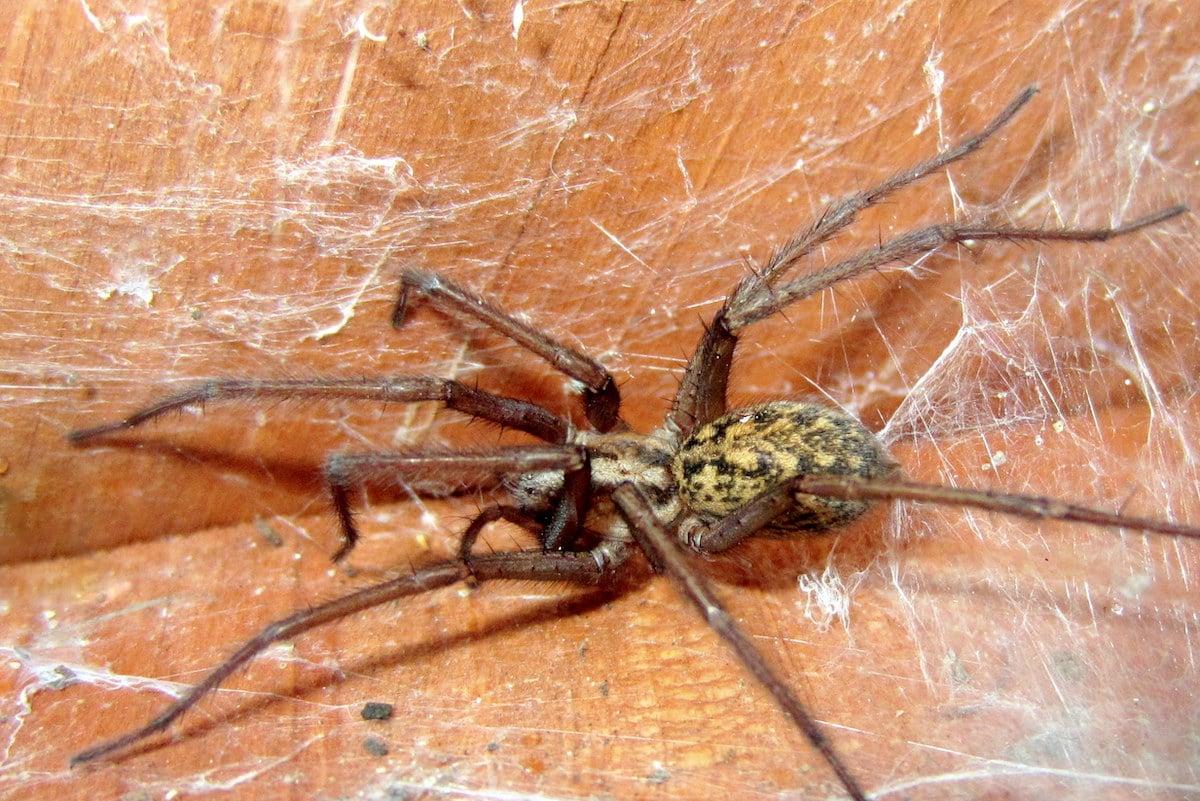 spider in basement